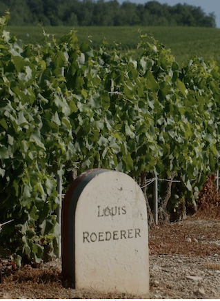Louis Roederer, Most Admired Brand Champagne